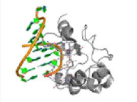 Protein binding to DNA via van der Waals interaction